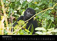 Ugandas friedliche Berggorillas (Wandkalender 2018 DIN A4 quer) Dieser erfolgreiche Kalender wurde dieses Jahr mit gleic - Produktdetailbild 9