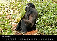 Ugandas friedliche Berggorillas (Wandkalender 2018 DIN A4 quer) Dieser erfolgreiche Kalender wurde dieses Jahr mit gleic - Produktdetailbild 11