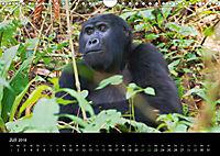 Ugandas friedliche Berggorillas (Wandkalender 2018 DIN A4 quer) Dieser erfolgreiche Kalender wurde dieses Jahr mit gleic - Produktdetailbild 7