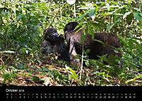 Ugandas friedliche Berggorillas (Wandkalender 2018 DIN A4 quer) Dieser erfolgreiche Kalender wurde dieses Jahr mit gleic - Produktdetailbild 10