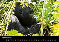 Ugandas friedliche Berggorillas (Wandkalender 2018 DIN A4 quer) Dieser erfolgreiche Kalender wurde dieses Jahr mit gleic - Produktdetailbild 12