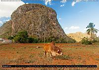 Valle de Viñales - Kubas Tal der Träume (Wandkalender 2018 DIN A2 quer) Dieser erfolgreiche Kalender wurde dieses Jahr m - Produktdetailbild 8