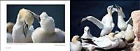 Vögel in Norddeutschland - Produktdetailbild 4