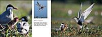 Vögel in Norddeutschland - Produktdetailbild 10