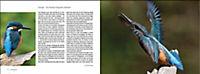 Vögel in Norddeutschland - Produktdetailbild 11