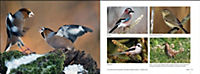 Vögel in Norddeutschland - Produktdetailbild 13