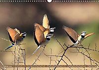 Vogelparadiese Afrikas - Sambesi, Okavango Delta, Chobe (Wandkalender 2018 DIN A3 quer) - Produktdetailbild 2