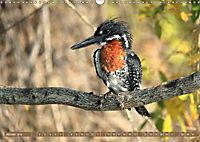 Vogelparadiese Afrikas - Sambesi, Okavango Delta, Chobe (Wandkalender 2018 DIN A3 quer) - Produktdetailbild 1