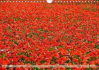 Voll Mohn (Wandkalender 2018 DIN A4 quer) - Produktdetailbild 7