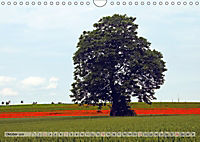 Voll Mohn (Wandkalender 2018 DIN A4 quer) - Produktdetailbild 10