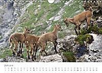 Von Bergen und Böcken (Wandkalender 2018 DIN A4 quer) - Produktdetailbild 6