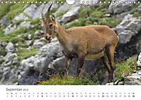 Von Bergen und Böcken (Wandkalender 2018 DIN A4 quer) - Produktdetailbild 9
