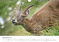 Von Bergen und Böcken (Wandkalender 2018 DIN A4 quer) - Produktdetailbild 11