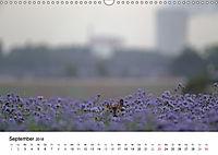Wildes Ruhrgebiet - Momente der Stadtnatur (Wandkalender 2018 DIN A3 quer) Dieser erfolgreiche Kalender wurde dieses Jah - Produktdetailbild 9