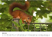Wildes Ruhrgebiet - Momente der Stadtnatur (Wandkalender 2018 DIN A3 quer) Dieser erfolgreiche Kalender wurde dieses Jah - Produktdetailbild 6