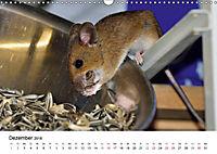 Wildes Ruhrgebiet - Momente der Stadtnatur (Wandkalender 2018 DIN A3 quer) Dieser erfolgreiche Kalender wurde dieses Jah - Produktdetailbild 12