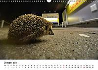 Wildes Ruhrgebiet - Momente der Stadtnatur (Wandkalender 2018 DIN A3 quer) Dieser erfolgreiche Kalender wurde dieses Jah - Produktdetailbild 10