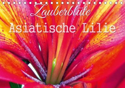 Zauberblüte - Asiatische Lilie (Tischkalender 2018 DIN A5 quer), Sandra Gebhardt