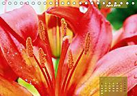 Zauberblüte - Asiatische Lilie (Tischkalender 2018 DIN A5 quer) - Produktdetailbild 4