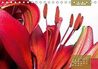Zauberblüte - Asiatische Lilie (Tischkalender 2018 DIN A5 quer) - Produktdetailbild 5