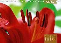 Zauberblüte - Asiatische Lilie (Tischkalender 2018 DIN A5 quer) - Produktdetailbild 3