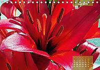 Zauberblüte - Asiatische Lilie (Tischkalender 2018 DIN A5 quer) - Produktdetailbild 6