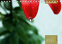 Zauberblüte - Asiatische Lilie (Tischkalender 2018 DIN A5 quer) - Produktdetailbild 11