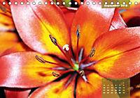 Zauberblüte - Asiatische Lilie (Tischkalender 2018 DIN A5 quer) - Produktdetailbild 9