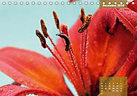 Zauberblüte - Asiatische Lilie (Tischkalender 2018 DIN A5 quer) - Produktdetailbild 12