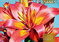 Zauberblüte - Asiatische Lilie (Tischkalender 2018 DIN A5 quer) - Produktdetailbild 8