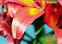 Zauberblüte - Asiatische Lilie (Tischkalender 2018 DIN A5 quer) - Produktdetailbild 10