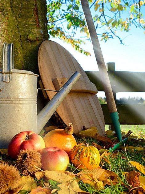 Im Herbst sollten Sie Futterstationen für die Vögel vorbereiten