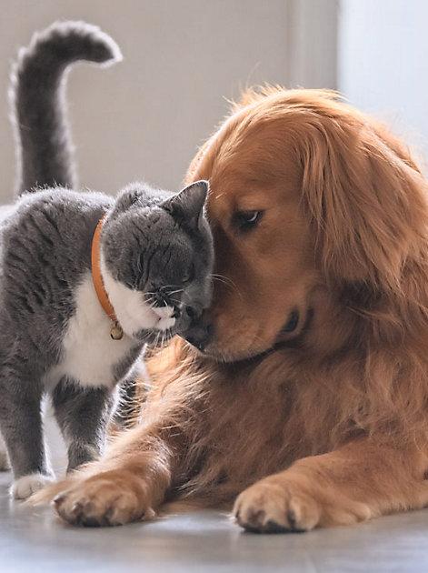 So deuten Sie die Körpersprache Ihres Haustieres richtig