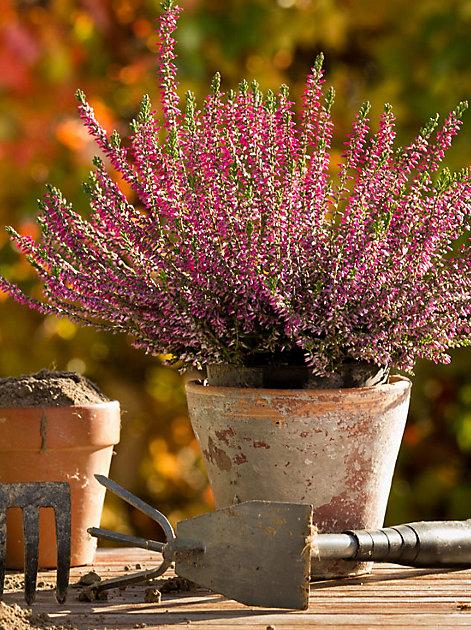 Damit es Ihre Pflanzen im Freien bei frostigen Temperaturen kuschelig warm haben, sollten Sie Ihren Garten jetzt winterfest machen.