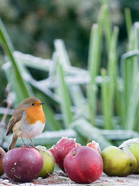 Vögel brauchen in der kalten Jahreszeit unsere Hilfe