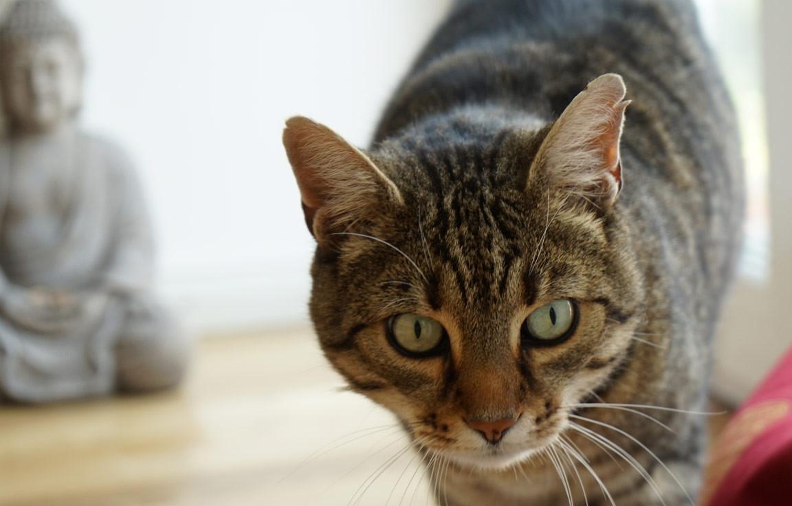 Hallo kleine Göttin - die 5 Geheimnisse der Katze - Weltbild Magazin ...