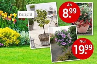 Neu bei uns im Sortiment: Blumen & Pflanzen in großer Auswahl