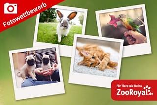 Jetzt Schnappschuss Ihres Haustieres hochladen und mit etwas Glcük tolle Preise gewinnen!