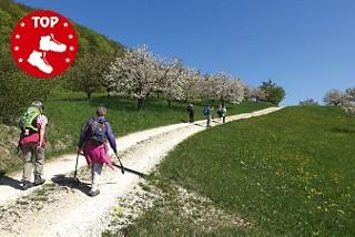 Von Hochwald via Nurglar nach Liestal