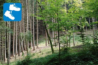 Über den Batzberg - Von Wald nach Rüti