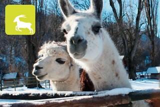 Zahme Tiere im Tierpark Chur zum anschauen und streicheln