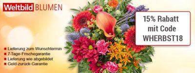 Sonnenblumen-Special