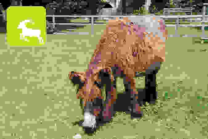Tierpark Lange Erlen - Kostenloser Eintritt
