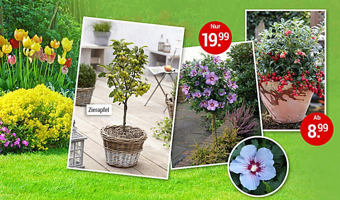 Einstieg Dominik Pflanzen