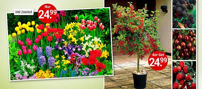 Bild Dominik-Pflanzen