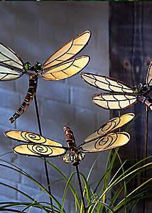 Bild Libellen