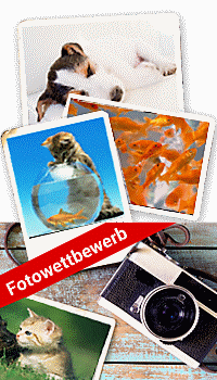 Tierische Mitbewohner fotografieren & Weltbild Fotoservice Gutscheine gewinnen!