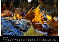 2019 Colour and Light (Wall Calendar 2019 DIN A4 Landscape) - Produktdetailbild 4