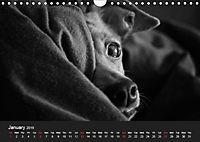 A dog s life / UK Version (Wall Calendar 2019 DIN A4 Landscape) - Produktdetailbild 1