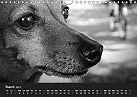 A dog's life / UK Version (Wall Calendar 2019 DIN A4 Landscape) - Produktdetailbild 3